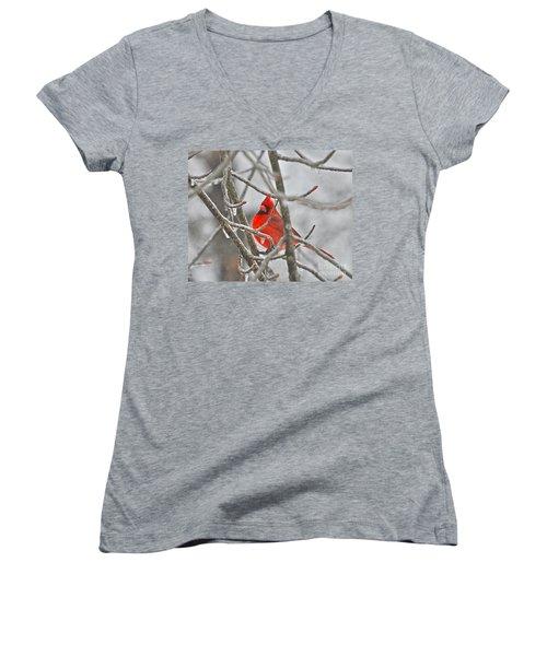 Red Cardinal Northern Bird Women's V-Neck T-Shirt