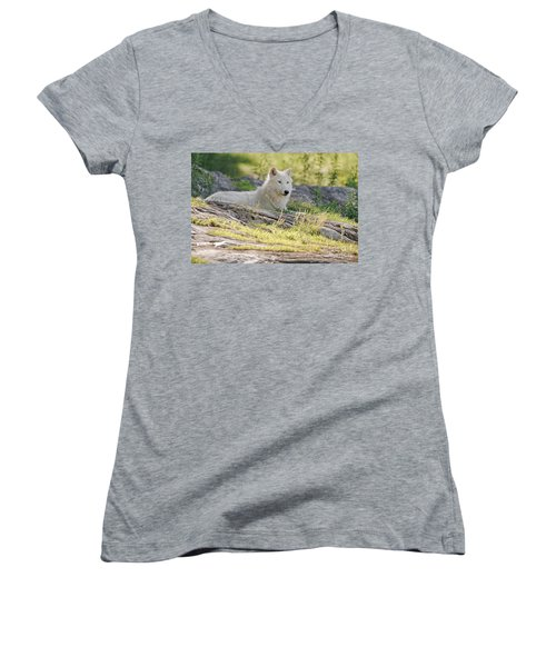 Women's V-Neck T-Shirt (Junior Cut) featuring the photograph Resting Arctic Wolf by Wolves Only