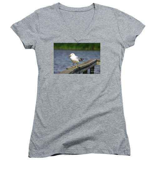 Ring-billed Gull Women's V-Neck T-Shirt