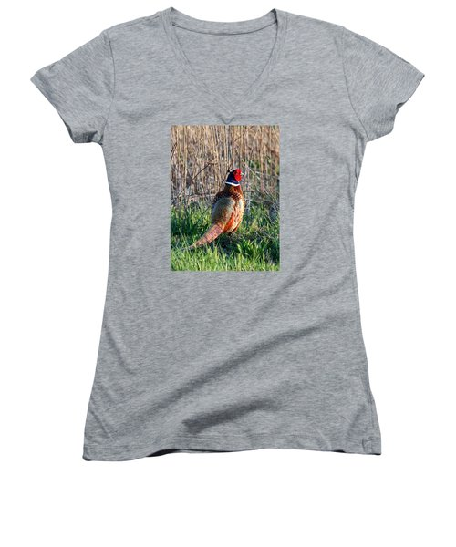 Ring-necked Pheasant Women's V-Neck T-Shirt (Junior Cut) by George Jones
