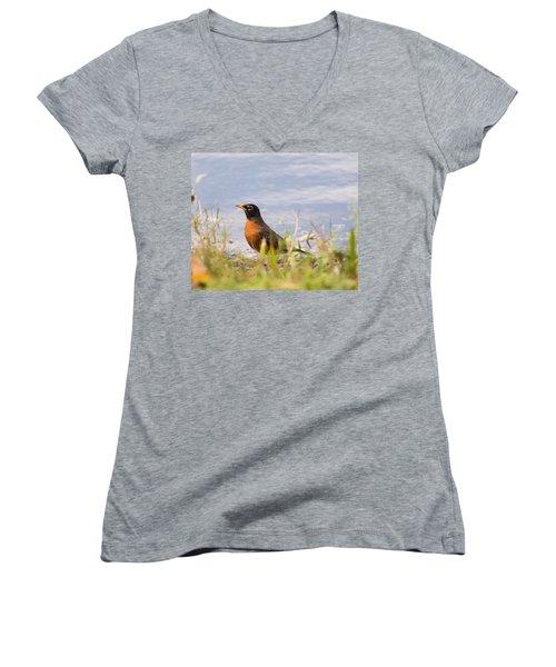 Women's V-Neck T-Shirt (Junior Cut) featuring the photograph Robin Viewing Surroundings by John M Bailey