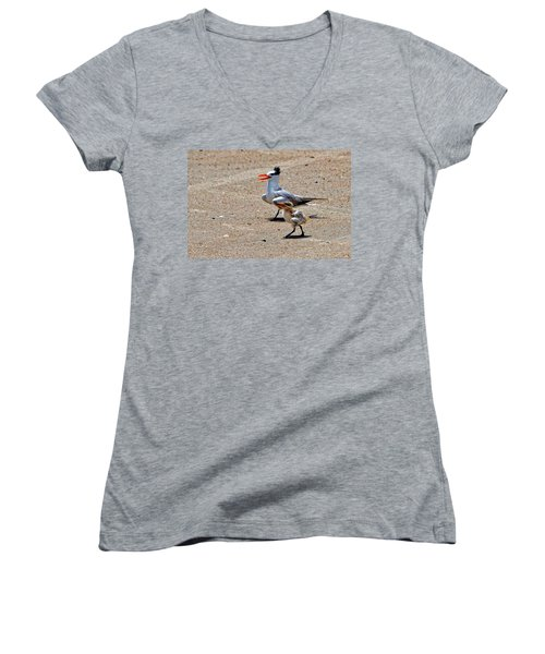 Royal Tern With Chick Women's V-Neck