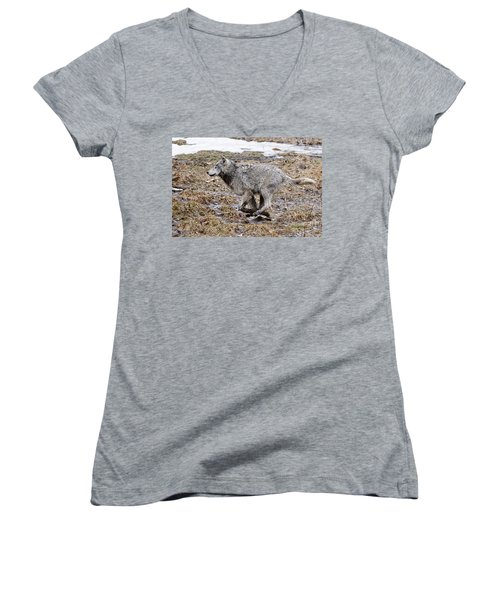 Women's V-Neck T-Shirt (Junior Cut) featuring the photograph Running Timber Wolf by Wolves Only