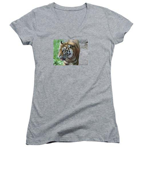 Women's V-Neck T-Shirt (Junior Cut) featuring the photograph Siberian Tiger by Lingfai Leung