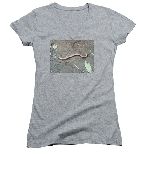 Slow Worm Women's V-Neck T-Shirt (Junior Cut) by John Williams