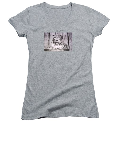 Women's V-Neck T-Shirt (Junior Cut) featuring the photograph White Snow Leopard Chillin by Belinda Lee