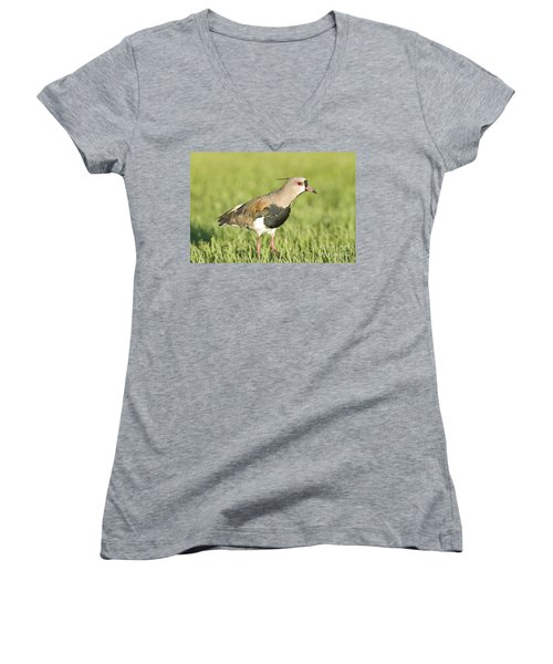 Southern Lapwing Women's V-Neck (Athletic Fit)
