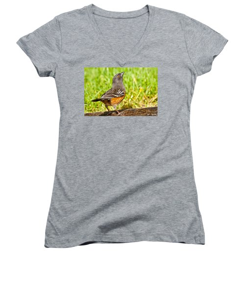 Spotted Towhee Looking Up Women's V-Neck T-Shirt (Junior Cut) by Jeff Goulden