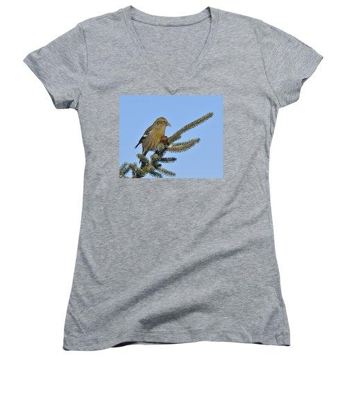 Spruce Cone Feeder Women's V-Neck T-Shirt (Junior Cut) by Tony Beck