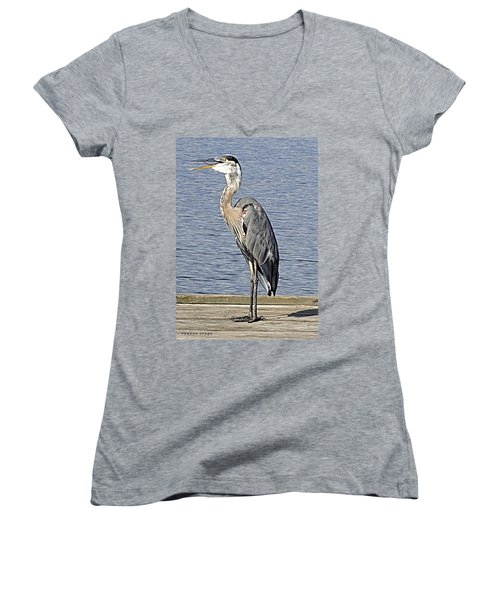 The Great Blue Heron Photo Women's V-Neck T-Shirt (Junior Cut) by Verana Stark