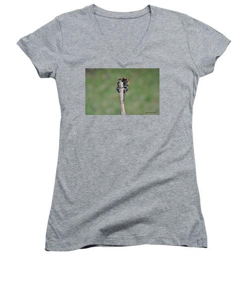 Women's V-Neck T-Shirt (Junior Cut) featuring the photograph The Posing Beetle by Verana Stark
