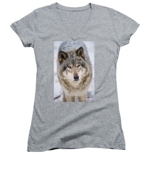 Timber Wolf Pictures 254 Women's V-Neck