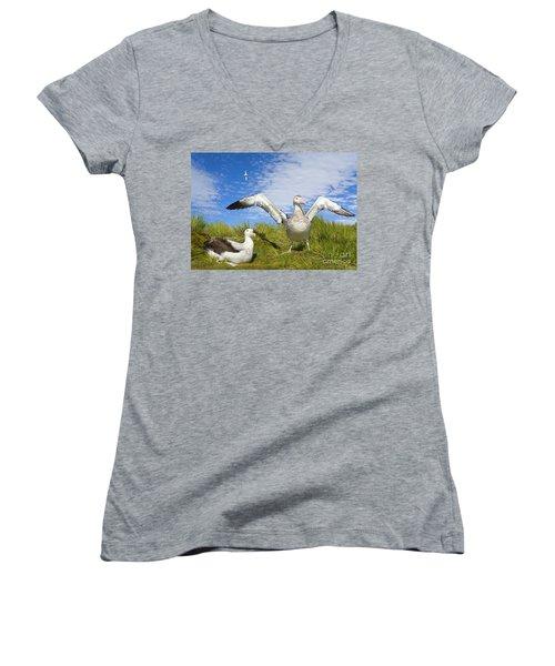 Wandering Albatross Courting  Women's V-Neck T-Shirt (Junior Cut) by Yva Momatiuk John Eastcott
