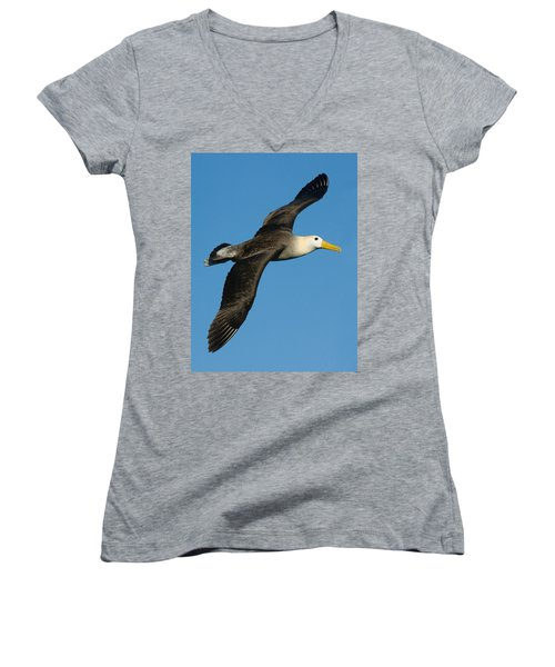 Waved Albatross Diomedea Irrorata Women's V-Neck (Athletic Fit)