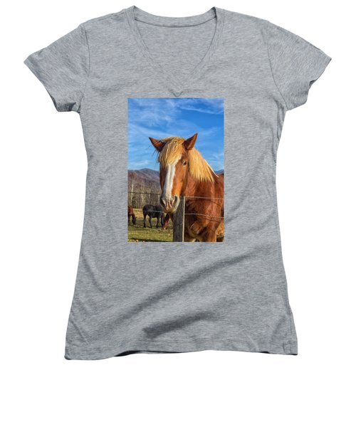 Wild Horse At Cades Cove In The Great Smoky Mountains National Park Women's V-Neck