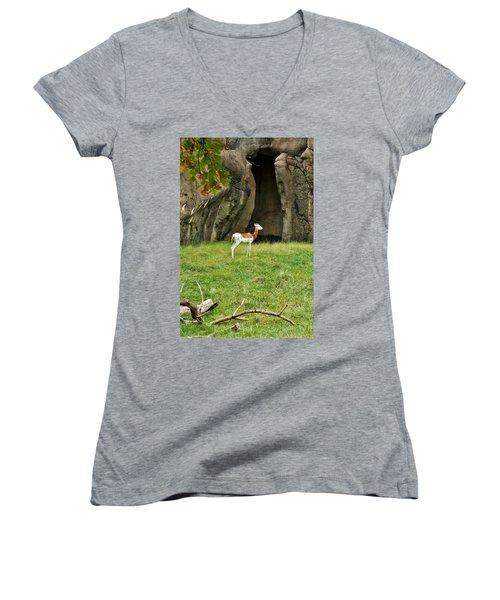 Young Addra Gazelle Women's V-Neck T-Shirt (Junior Cut) by Jean Goodwin Brooks