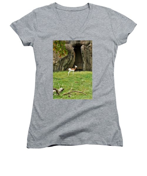 Women's V-Neck T-Shirt (Junior Cut) featuring the photograph Young Addra Gazelle by Jean Goodwin Brooks