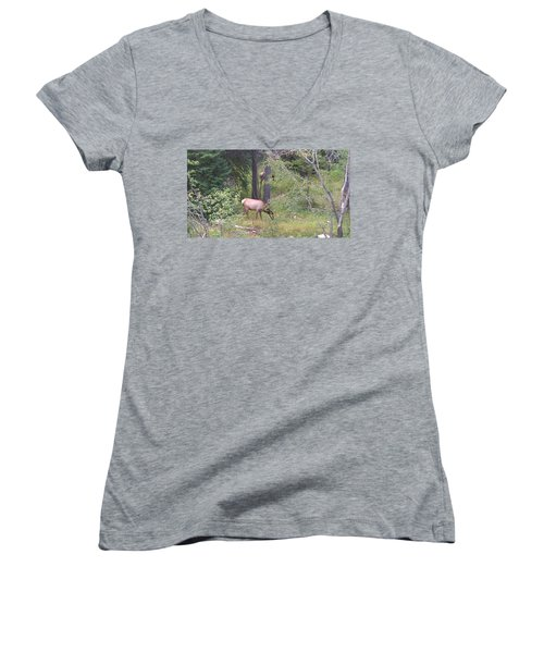 Women's V-Neck T-Shirt (Junior Cut) featuring the photograph Young Elk Grazing by Fortunate Findings Shirley Dickerson