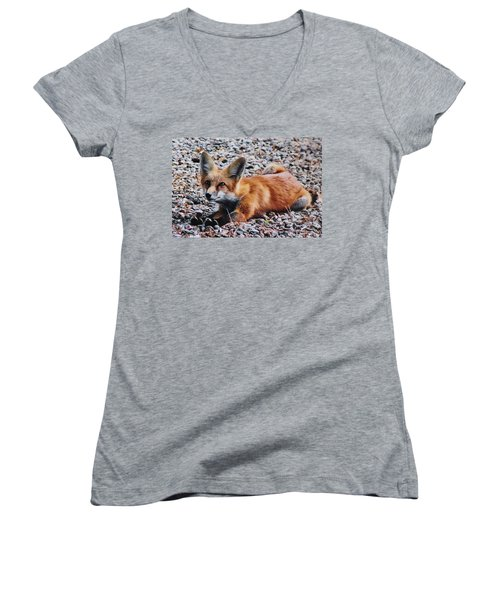 Women's V-Neck T-Shirt (Junior Cut) featuring the photograph Young Red Fox Watches Squirrel by Diane Alexander