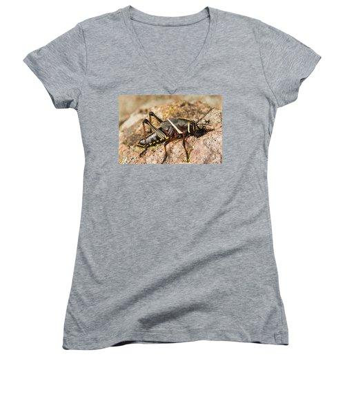 A Colorful Lubber Grasshopper Women's V-Neck T-Shirt (Junior Cut) by Jack Goldfarb