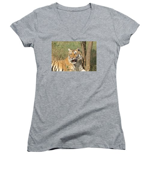 A Tiger Lying Casually But Fully Alert Women's V-Neck T-Shirt (Junior Cut)
