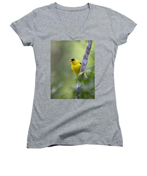 American Goldfinch - Peaceful Women's V-Neck T-Shirt (Junior Cut) by Travis Truelove