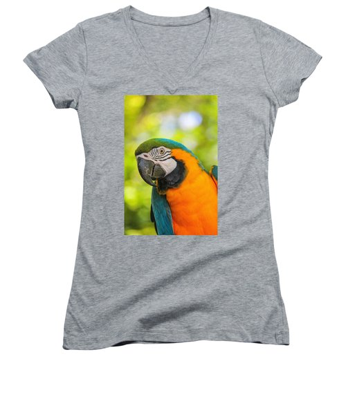 Blue And Gold Macaw Women's V-Neck