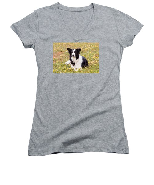 Border Collie In Field Of Yellow Flowers Women's V-Neck (Athletic Fit)