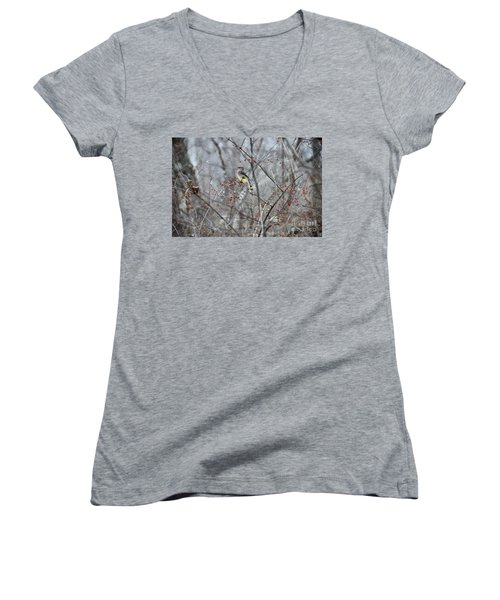 Cedar Wax Wing 3 Women's V-Neck T-Shirt (Junior Cut) by David Arment