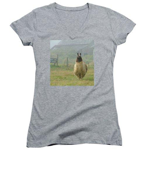 Women's V-Neck T-Shirt (Junior Cut) featuring the photograph Coast Llama by Wendy McKennon