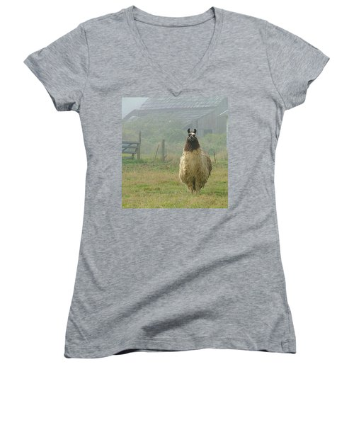Coast Llama Women's V-Neck (Athletic Fit)