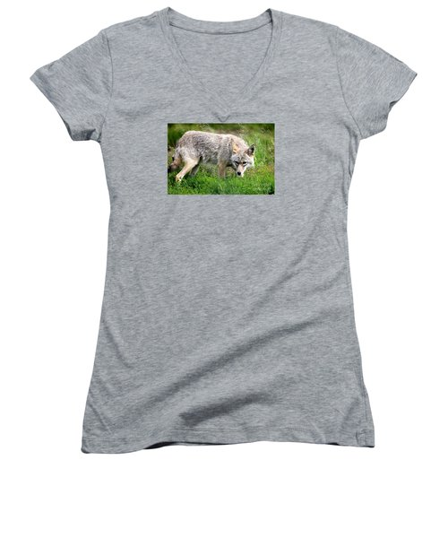 Women's V-Neck T-Shirt (Junior Cut) featuring the photograph Coyote On The Prowl by Kathy  White