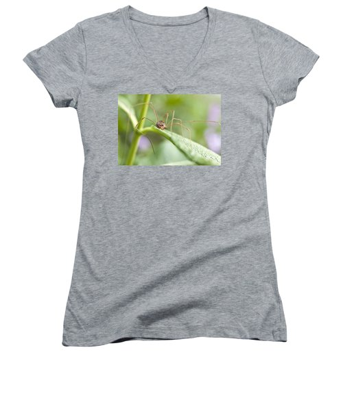 Women's V-Neck T-Shirt (Junior Cut) featuring the photograph Creepy Crawly Spider by Jeannette Hunt