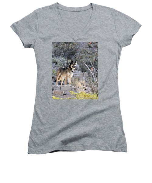 Dog In The Mountains Women's V-Neck