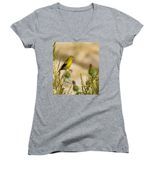 Goldfinch On Lookout Women's V-Neck T-Shirt (Junior Cut) by Bill Pevlor