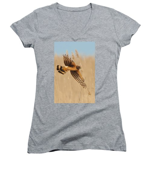 Harrier Over Golden Grass Women's V-Neck