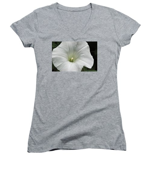 Women's V-Neck T-Shirt (Junior Cut) featuring the photograph Hedge Morning Glory by Tikvah's Hope