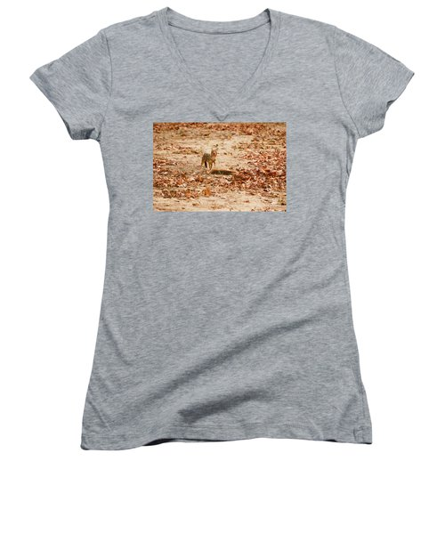 Women's V-Neck T-Shirt (Junior Cut) featuring the photograph Jackal Standing Over Deer Kill by Fotosas Photography