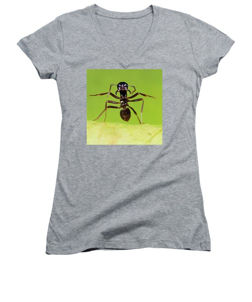 Japanese Slave-making Ant Polyergus Women's V-Neck T-Shirt (Junior Cut) by Satoshi Kuribayashi