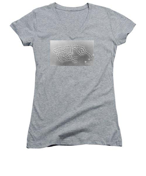 Lampbrush Chromosomes Newt, Lm Women's V-Neck T-Shirt