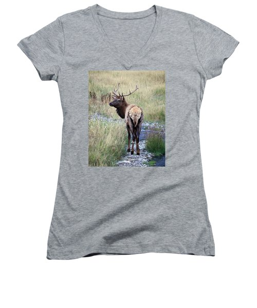 Looking Back Bull Women's V-Neck T-Shirt (Junior Cut) by Steve McKinzie
