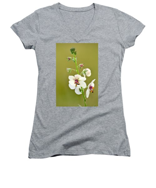 Women's V-Neck T-Shirt (Junior Cut) featuring the photograph Moth Mullein by JD Grimes
