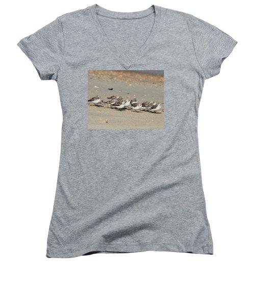 Resting Sandpipers Women's V-Neck T-Shirt