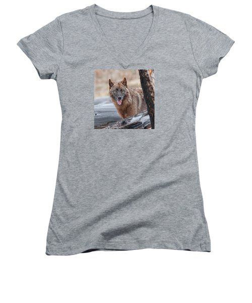 The Lone Wolf Women's V-Neck T-Shirt (Junior Cut) by CR  Courson