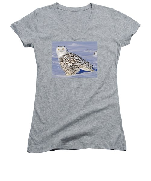 Young Snowy Owl Women's V-Neck