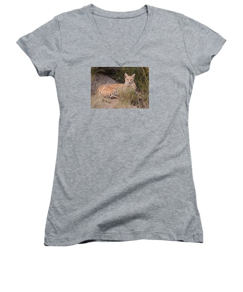 Bobcat At Rest Women's V-Neck T-Shirt (Junior Cut) by Alan Toepfer