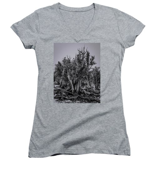 Ancient Bristlecone Pine Women's V-Neck (Athletic Fit)