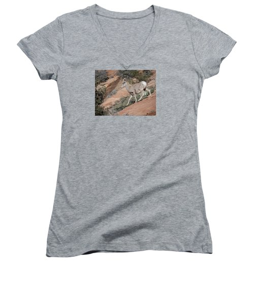 Big Horn Sheep Women's V-Neck T-Shirt (Junior Cut) by Tyson and Kathy Smith
