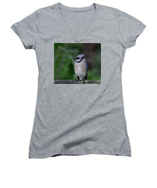 Blue Jay Women's V-Neck T-Shirt