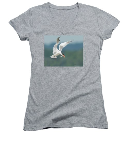 Caspian Tern With Fish Women's V-Neck (Athletic Fit)